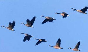 Перелетные птицы. Конспект занятия в старшей группе.