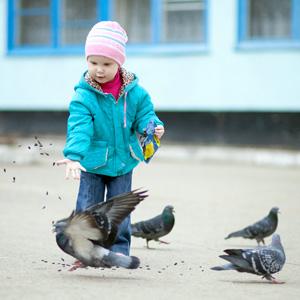 Наблюдение за птицами во время кормления