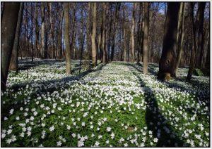 прогулка в весенний лес